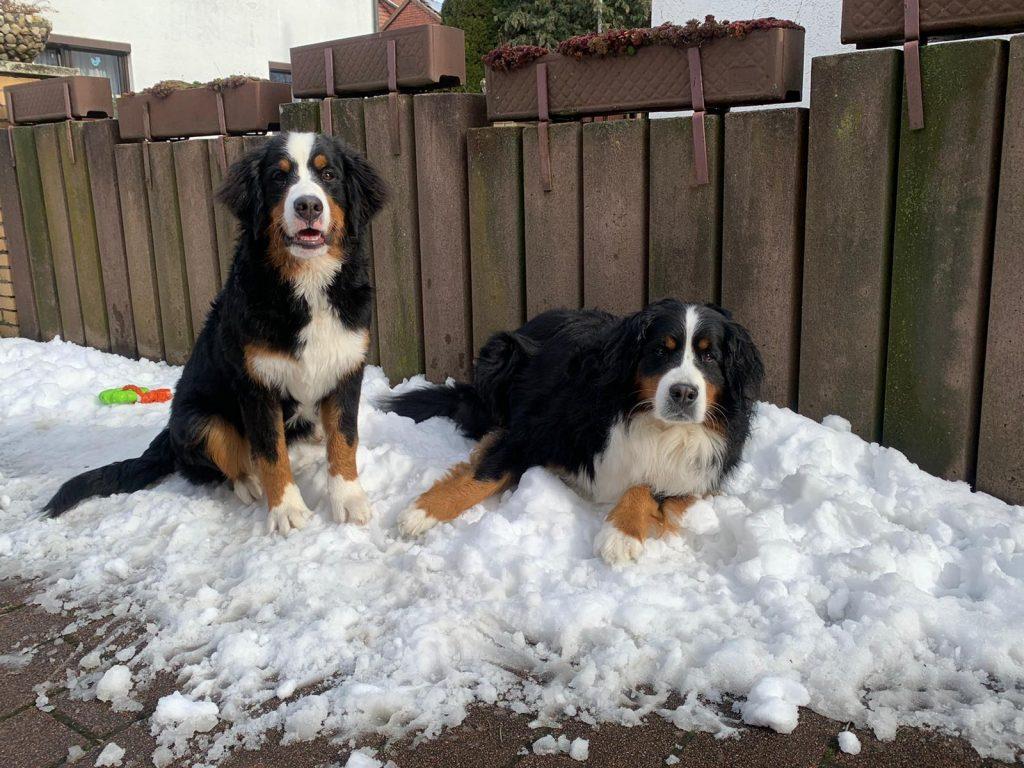 Den letzten Schnee geniesen