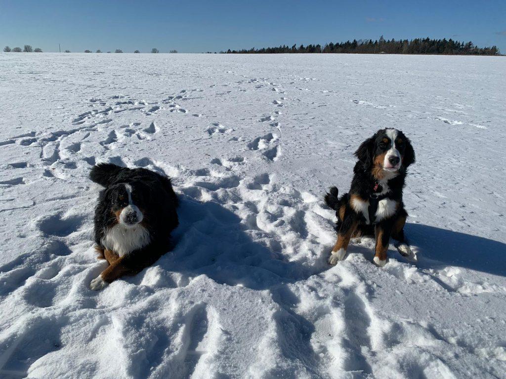 Schnee ist toll !