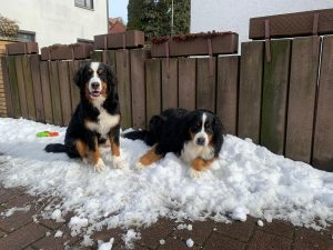 Den letzten Schnee geniesen 2